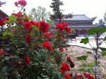 纪山寺小景(上传时间:2013-8-7)