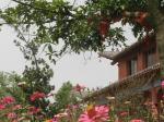 寺院小景--2014年10月